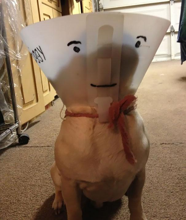 conos-impresionantes-mascotas-15