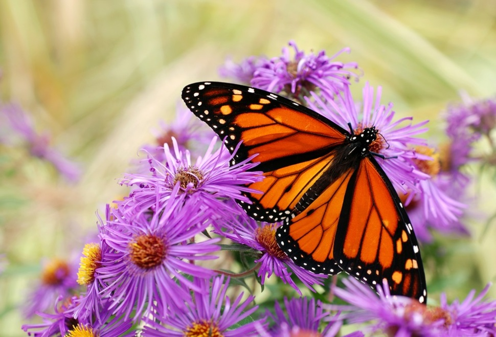 APK Butterflies Download - Free Photography APP for Android | APKPure.com