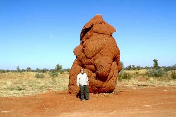 monticulos-termitas-01