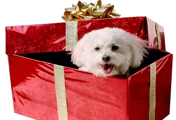 perro regalo