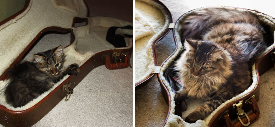 XX-Before-And-After-Photos-Of-Cats-Growing-Up-3__880