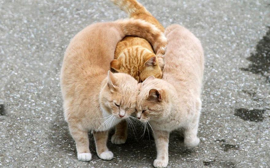 animal-love-friendship-101__880