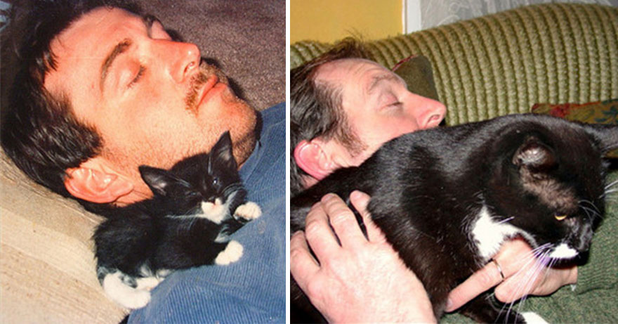 before-and-after-growing-up-cats-20__880
