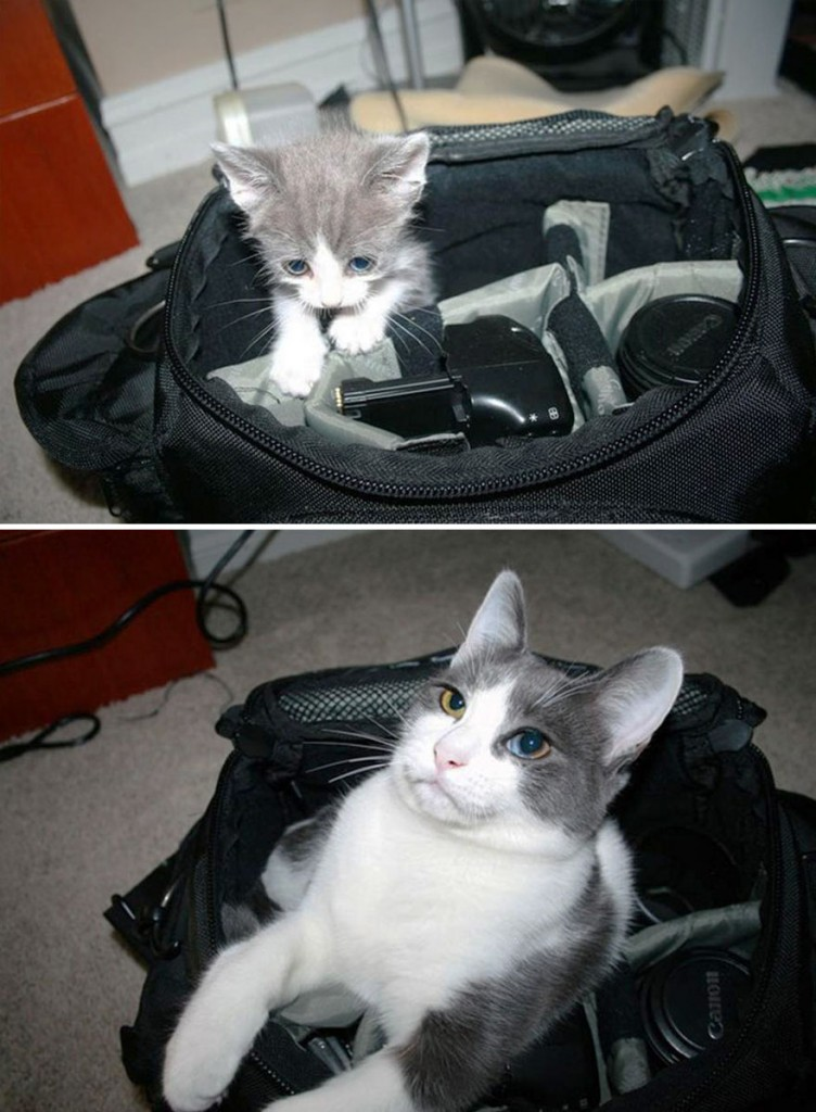 before-and-after-growing-up-cats-3__880