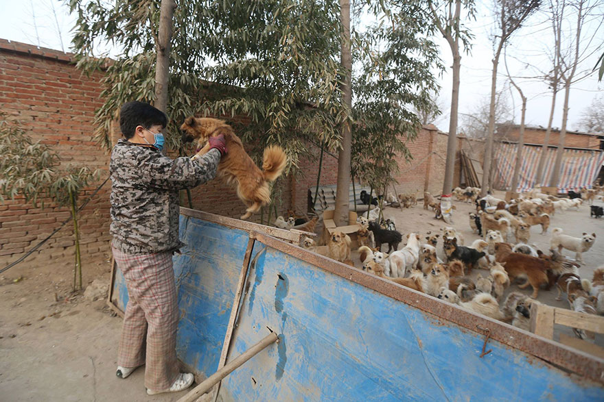 china-1300-stray-dog-shelter-wang-yanfang-6