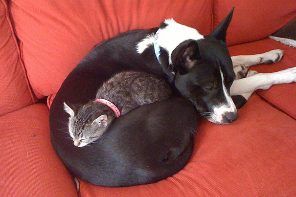 cute-cats-sleeping-on-dogs-11__605