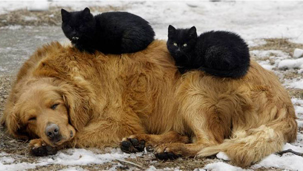 cute-cats-sleeping-on-dogs-20__605