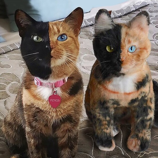 pet-copy-custom-plush-toys-cuddle-clones-21-605x605