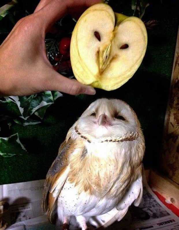things-looks-similar-owl-and-apple1__700-620x798