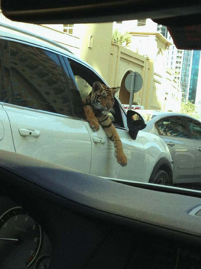 Dubai, una ciudad muy loca