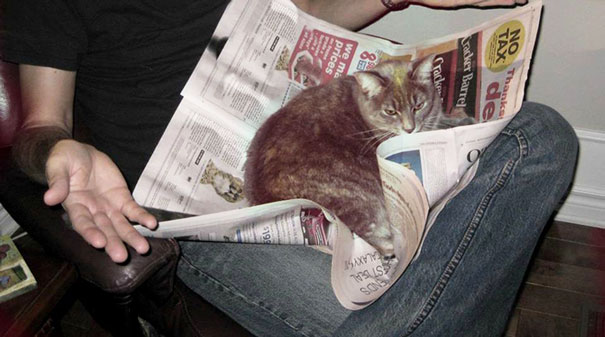 animals-dont-let-you-read-14__605