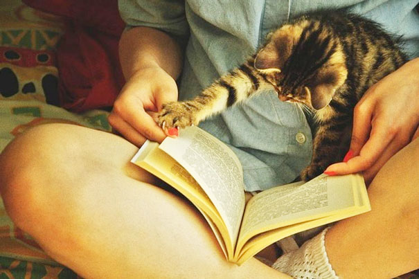 animals-dont-let-you-read-33__605
