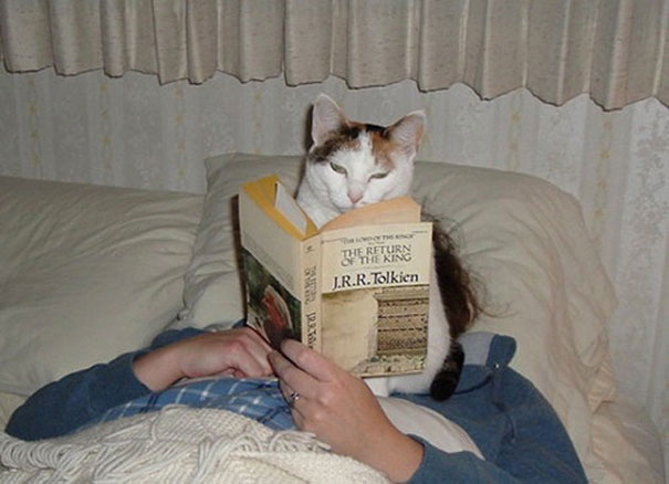 animals-dont-let-you-read-55__605