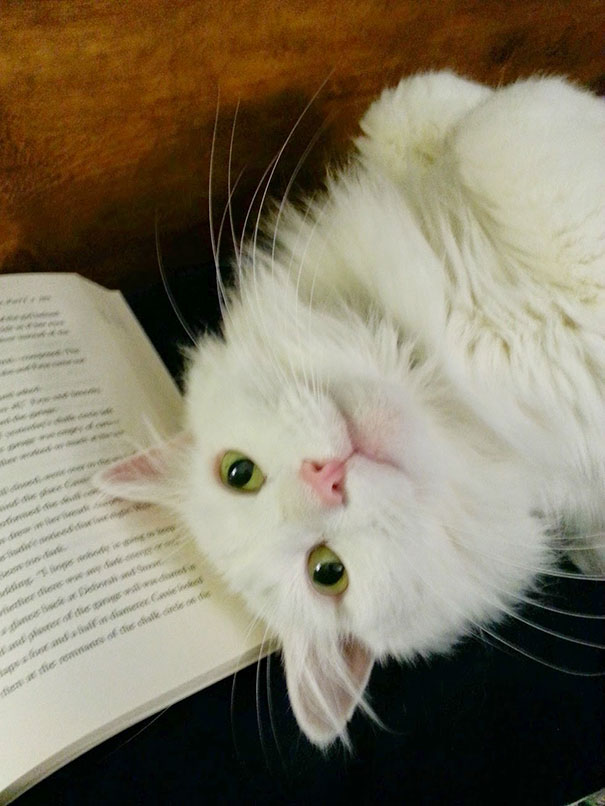 animals-dont-let-you-read-7__605