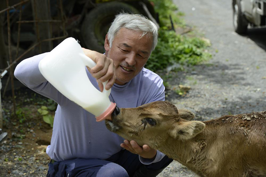 fukushima-radioactive-disaster-abandoned-animal-guardian-naoto-matsumura-1