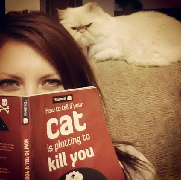 funny-evil-cat-planning-to-kill-you-23__605