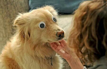 perros-con-problemas (1)