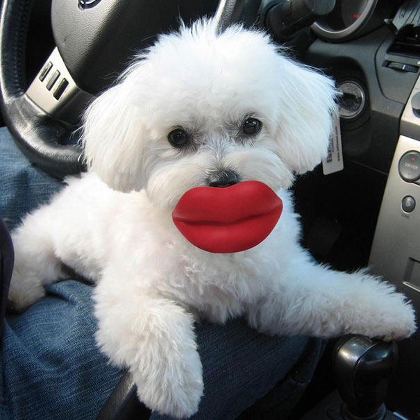 pet-toys-35__605