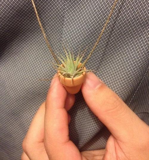 plants-jewelry20