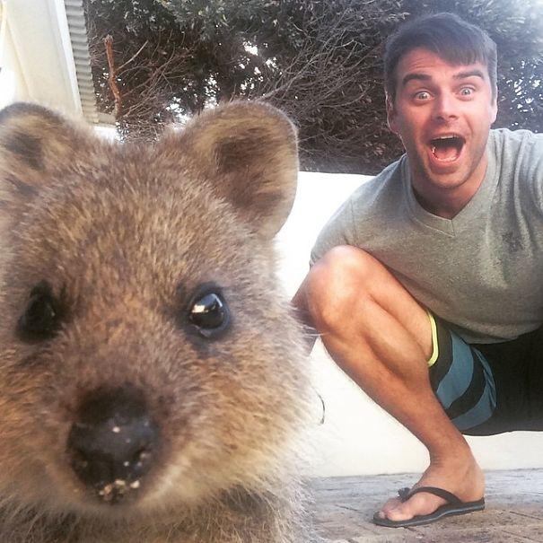 quokka-selfie-trend-cute-rodent-australia-12__605