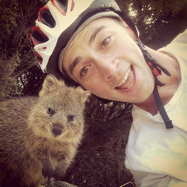 quokka-selfie-trend-cute-rodent-australia-15__605