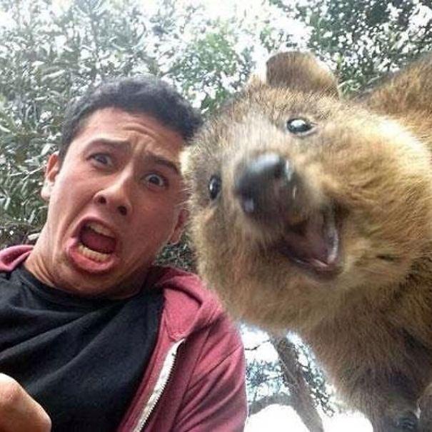 quokka-selfie-trend-cute-rodent-australia-22__605