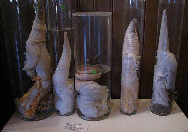 7-de-los-museos-mas-extranos-y-curiosos-del-mundo-5