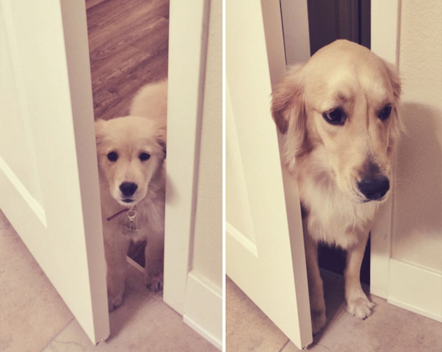 XX-before-and-after-dogs-growing-up-1__880