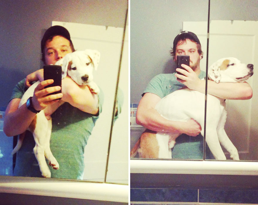 XX-before-and-after-dogs-growing-up-2__880