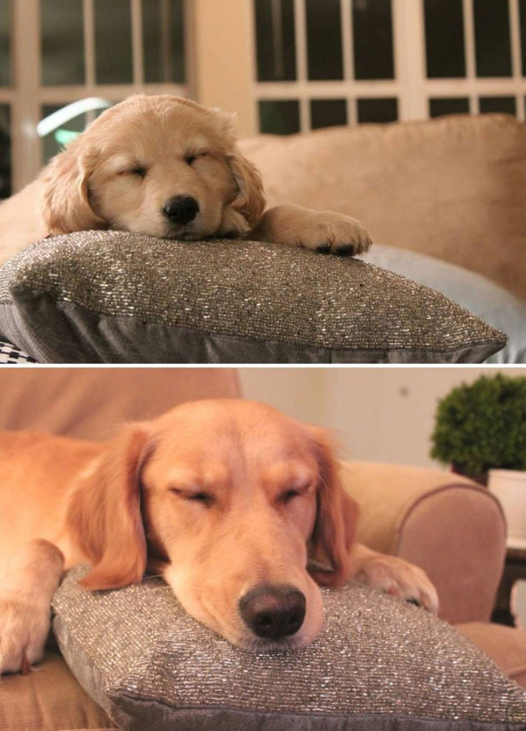 XX-before-and-after-dogs-growing-up-5__880