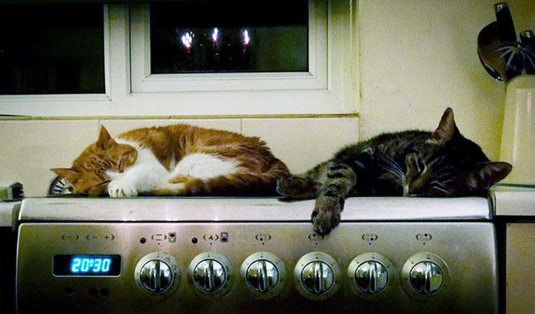 animales-que-aman-al-calor-10