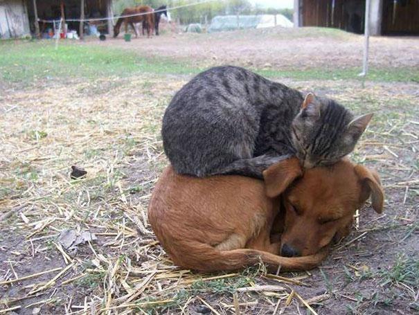 animales-que-aman-al-calor-11