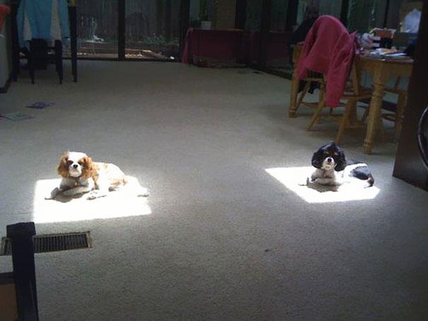 animales-que-aman-al-calor-14