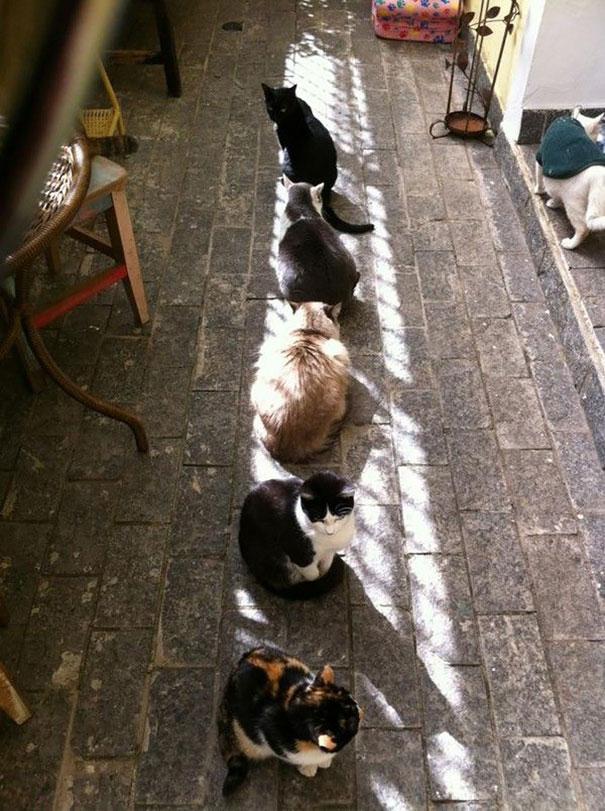 animales-que-aman-al-calor-15