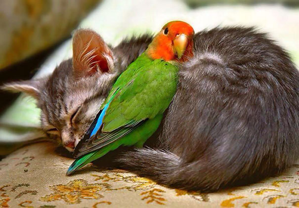 animales-que-aman-al-calor-17