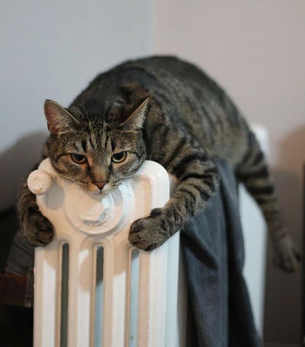 animales-que-aman-al-calor-19