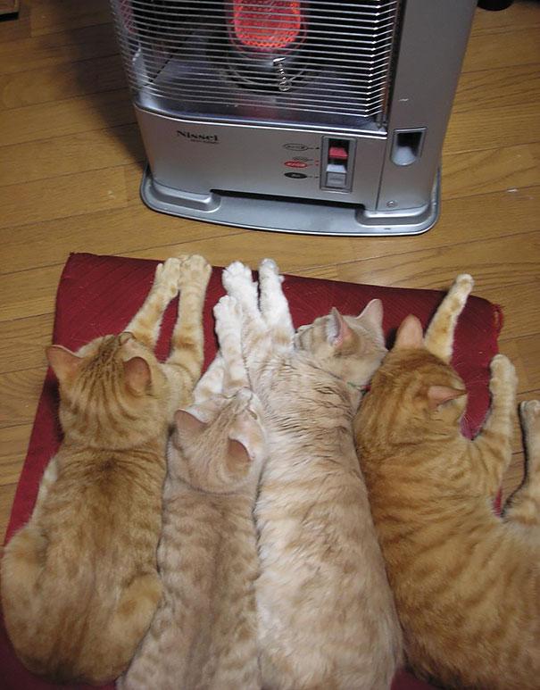 animales-que-aman-al-calor-6