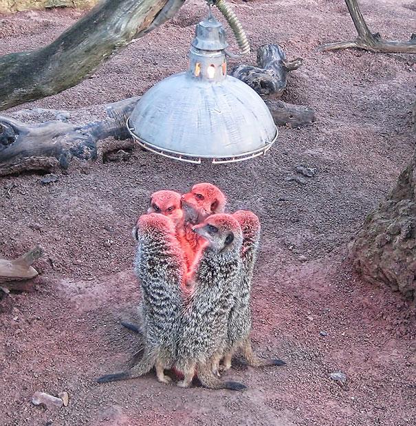 animales-que-aman-al-calor-71