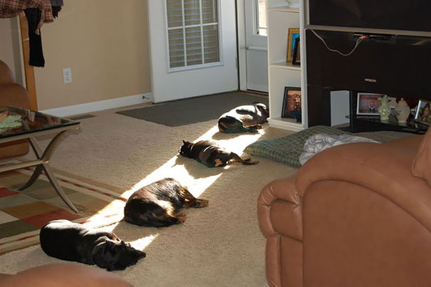 animales-que-aman-al-calor-9