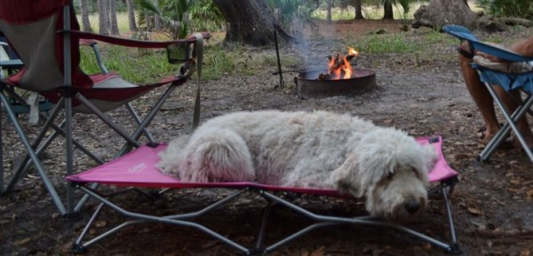 camping-dog-products13-600x289