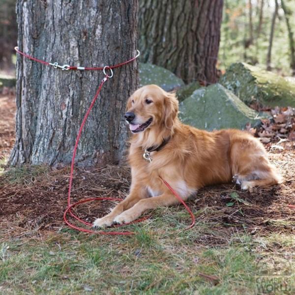 Viaja en septiembre con tu mascota al camping cañón del río lobos