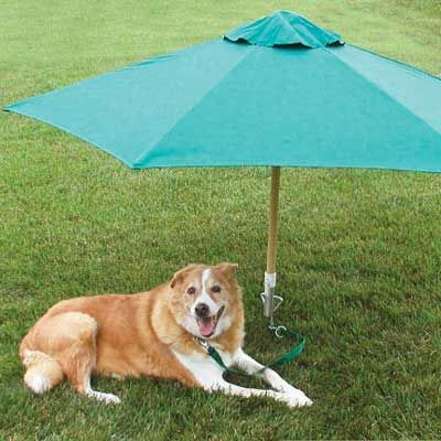 camping-dog-products15
