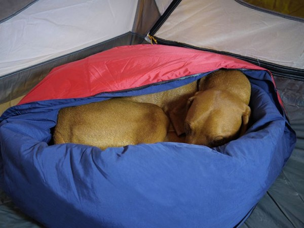 camping-dog-products16-600x450