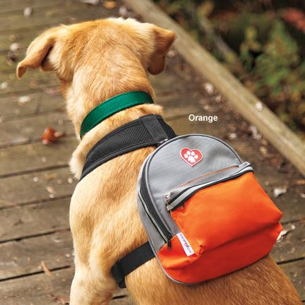 camping-dog-products17