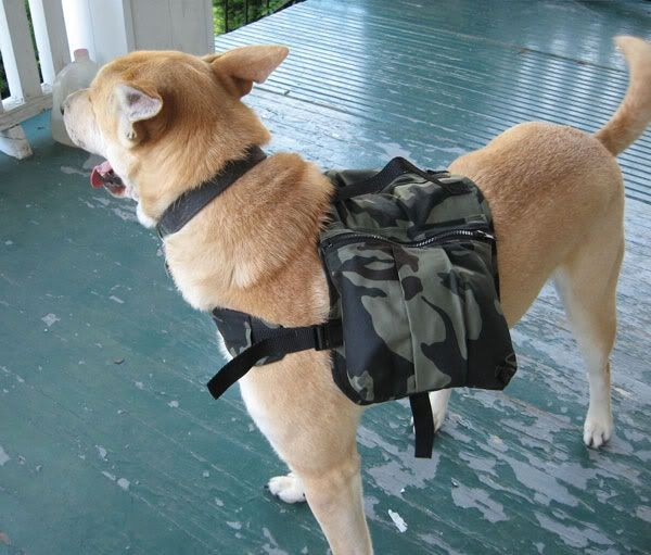 camping-dog-products4-600x511