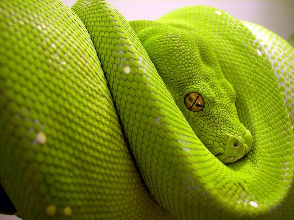 cosas-de-serpientes
