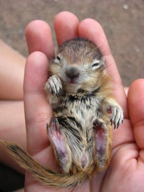 cute-baby-animals-palms-hands-37__605