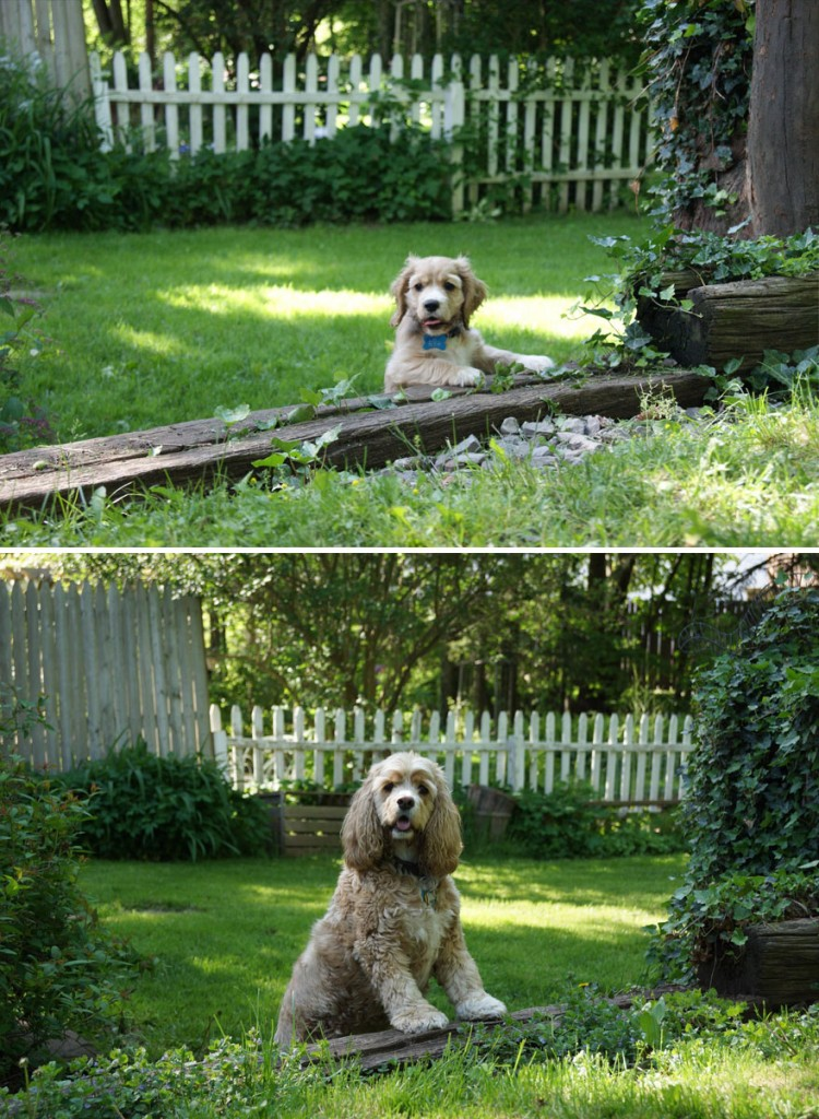 dogs-before-and-after-31__880
