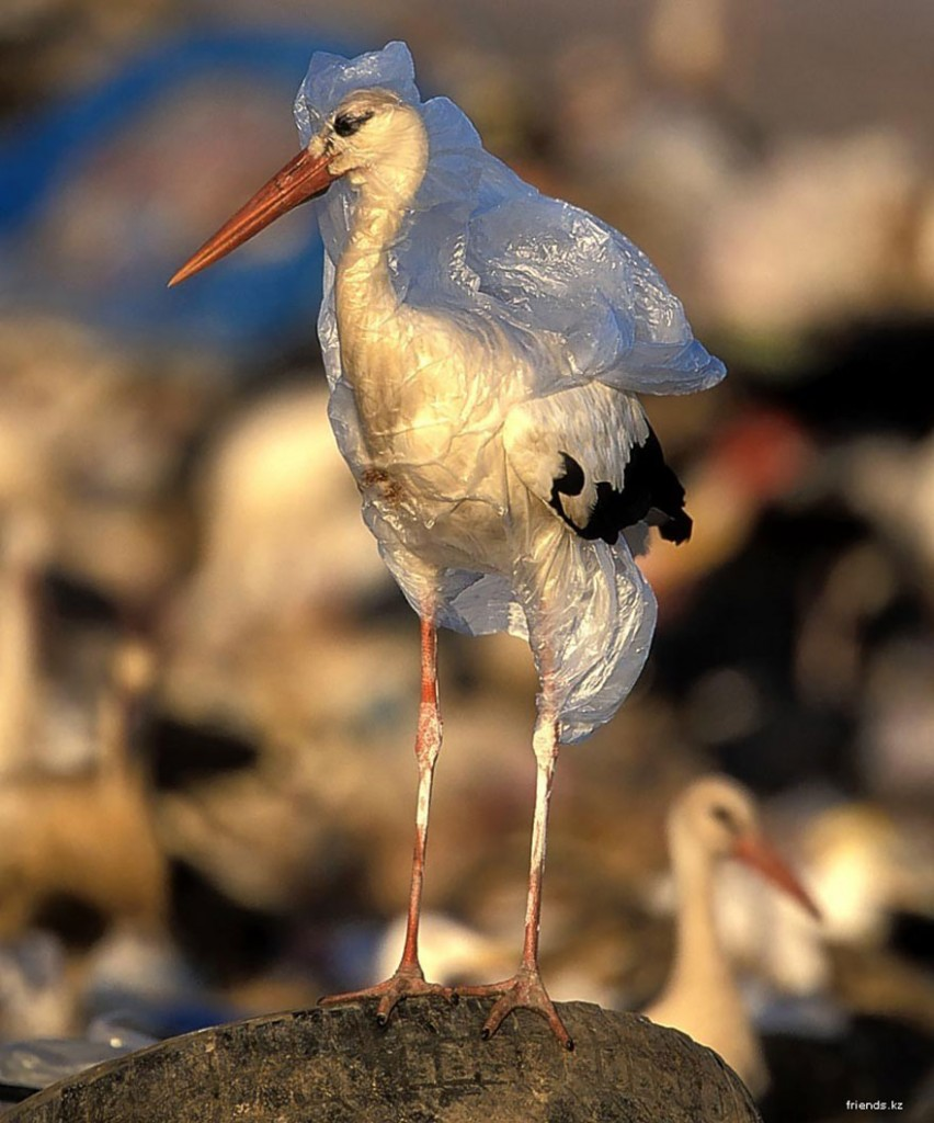 environmental-problems-pollution-36__880