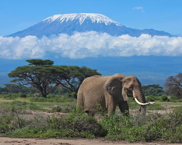 kilimanjaro-kilimanjaro-8388
